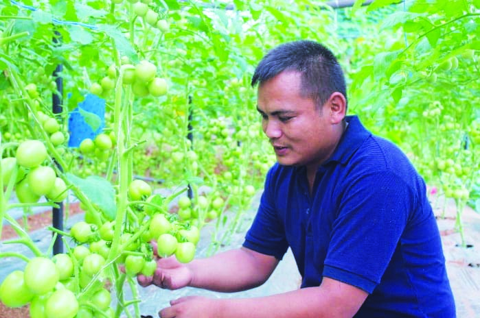 कृषि फर्मबाटै वार्षिक  दश लाख आम्दानी